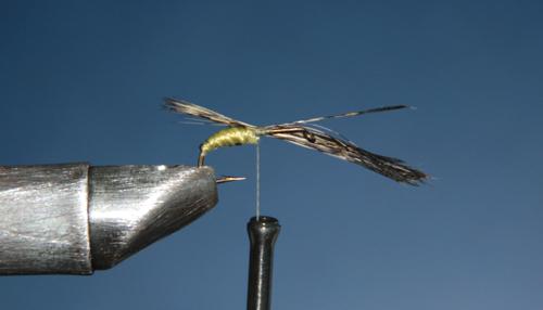 Tras haber dado unas vueltas de brinca sobre la tija del anzuelo,  y habiendo sujetado la brinca anterior, atamos la pluma.  Es importante hacer bien este paso para impedir que la pluma baile.