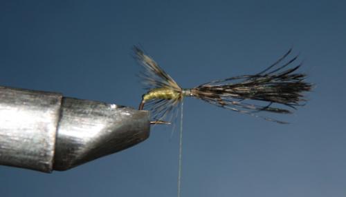 Después de estar la pluma bien fijada en el ángulo deseado y repartida correctamente, cortamos el sobrante de pluma y brinca.  Encolamos. Está lista para el segundo cuerpo.