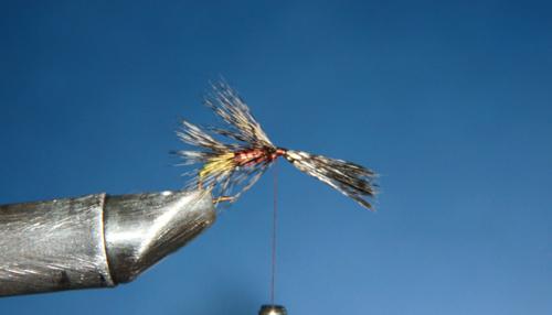 Atamos la pluma flor escoba, dejándola un poco más larga que la que habíamos colocado en el cuerpo inferior. Atamos rematando la mosca.